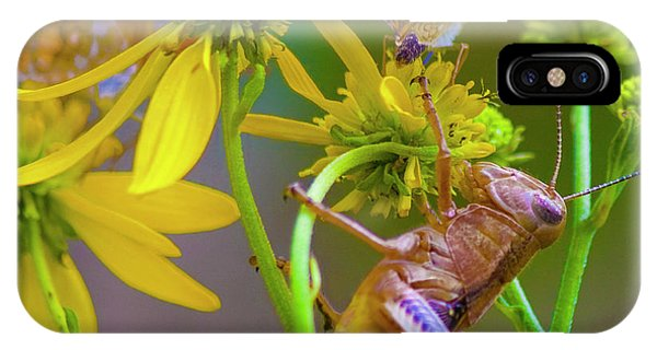 Grasshopper iPhone Case - The Little Things by Betsy Knapp