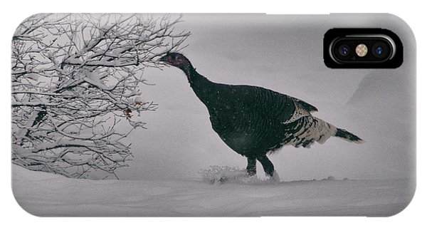 IPhone Case featuring the photograph The Lone Turkey by Jason Coward