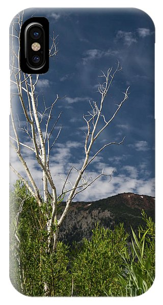 The Lonely Aspen  IPhone Case