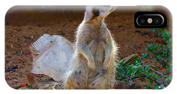The Lookout - Meerkat IPhone Case