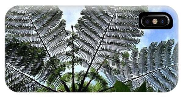 iPhone Case - Large Queen Fern - Puerto Viejo, Costa by In My Click Photography