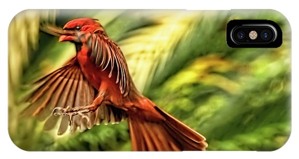 The Male Cardinal Approaches IPhone Case