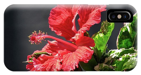The Mallow Hibiscus IPhone Case
