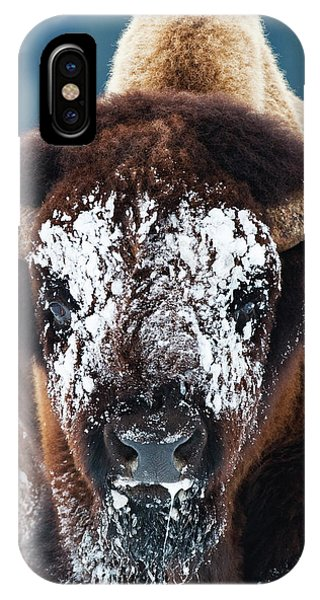 The Masked Bison IPhone Case