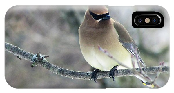 The Masked Cedar Waxwing IPhone Case