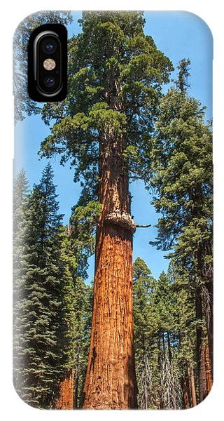 The Mckinley Giant Sequoia Tree Sequoia National Park IPhone Case