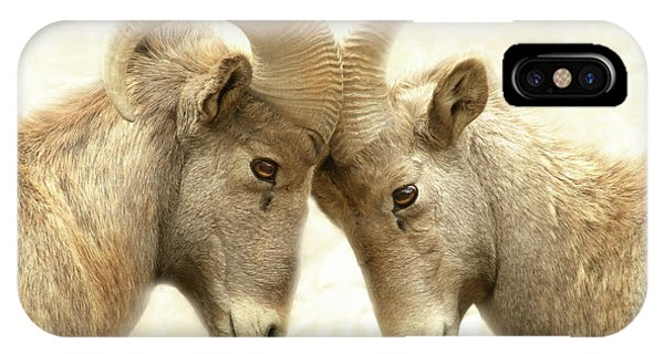 Rocky Mountain Bighorn Sheep iPhone Case - The Meeting Of The Minds by Brian Gustafson