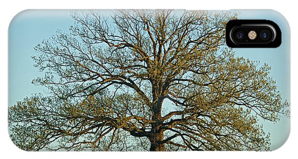 The Mighty Oak In Spring IPhone Case
