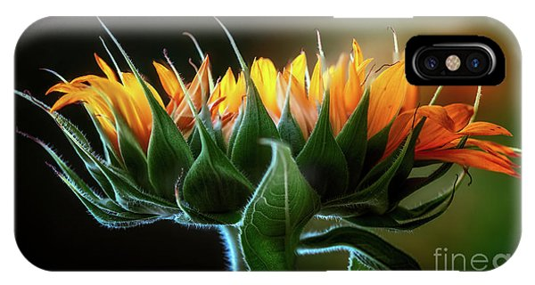 The Mighty Sunflower IPhone Case