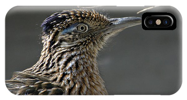 Greater Roadrunner iPhone Case - The Need For Speed by Fraida Gutovich