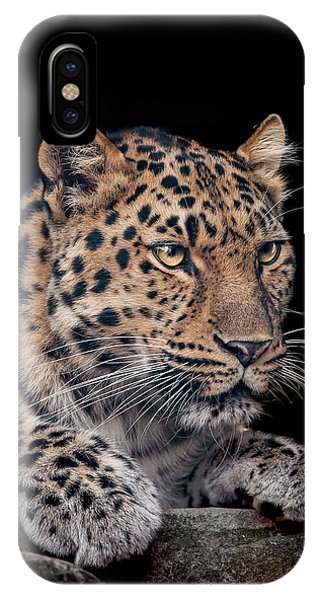 Big Cat iPhone Case - The Night Watchman by Paul Neville
