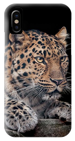 Leopard iPhone Case - The Night Watchman by Paul Neville