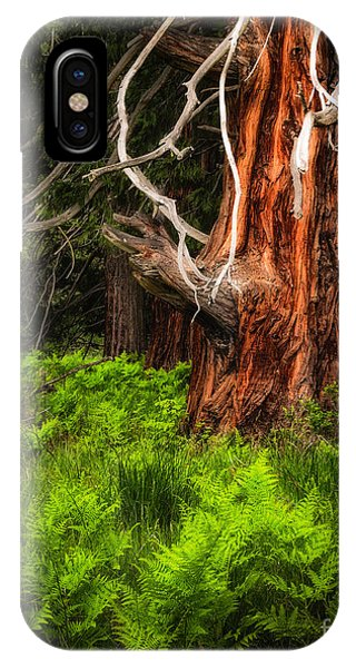 The Old Tree IPhone Case