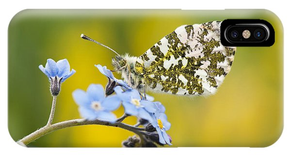 Mottled iPhone Case - The Orange Tip Butterfly by Tim Gainey