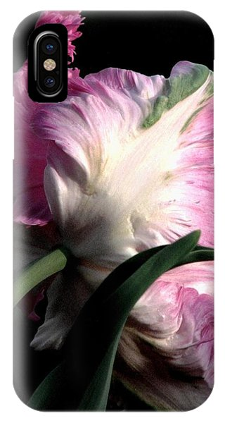 The Parrot Tulip Queen Of Spring IPhone Case