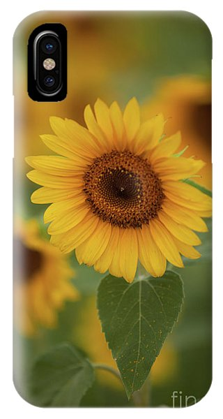The Patch Of Sunflowers IPhone Case