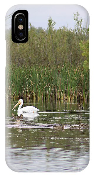 The Pelican And The Ducklings IPhone Case