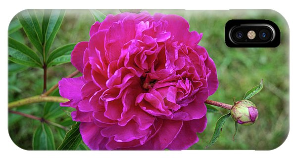 IPhone Case featuring the photograph The Peonie by Mark Dodd