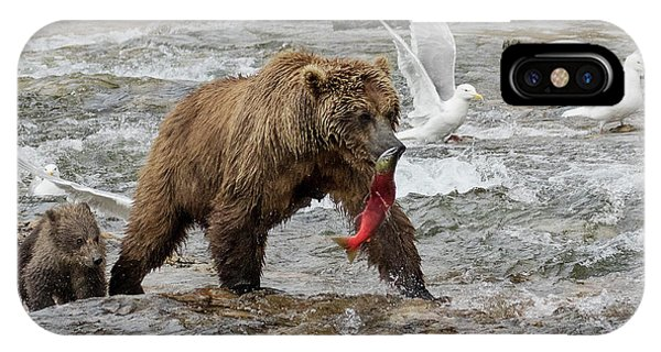 The Plight Of The Sockeye IPhone Case