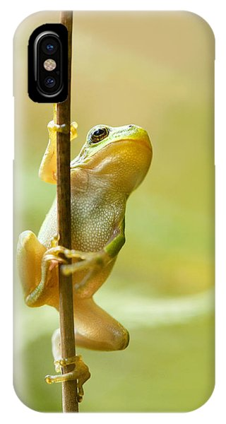 Frogs iPhone Case - The Pole Dancer - Climbing Tree Frog  by Roeselien Raimond