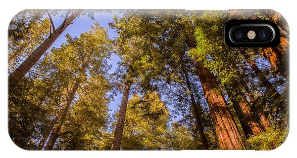 The Portola Redwood Forest IPhone Case