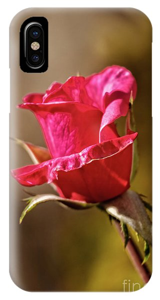 Rosebush iPhone Case - The Red Bud by Robert Bales