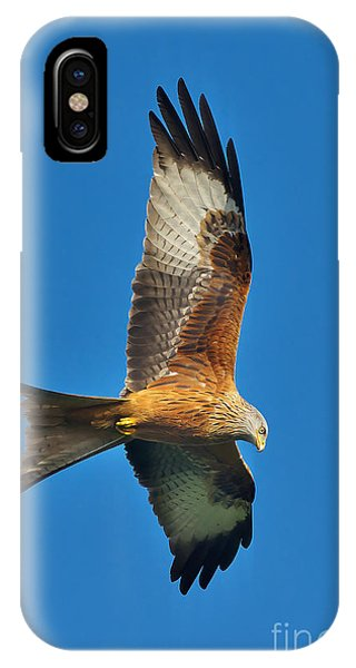 The Red Kite - Milvus Milvus IPhone Case