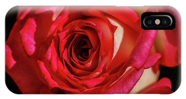 Rosebush iPhone Case - The Red Rose by Robert Bales