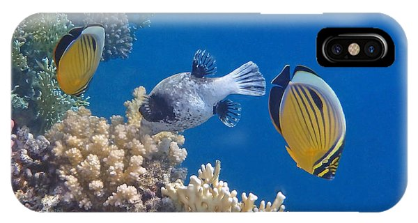 The Red Sea Underwater World IPhone Case