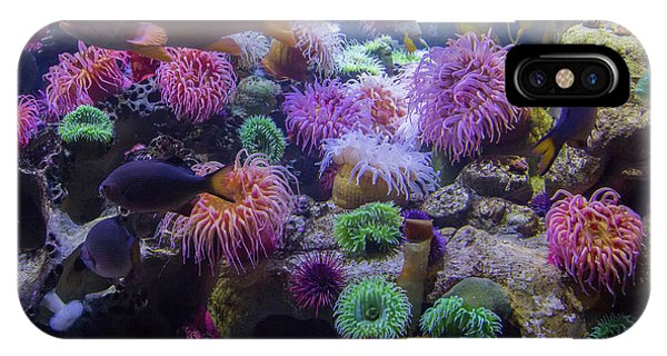 Salt Water iPhone Case - The Reef by Betsy Knapp