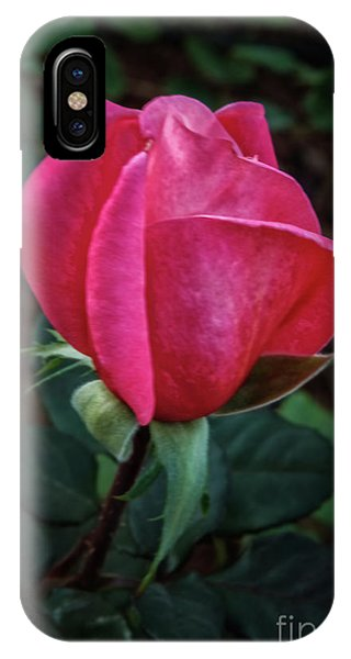 Rosebush iPhone Case - The Rose Bud by Robert Bales