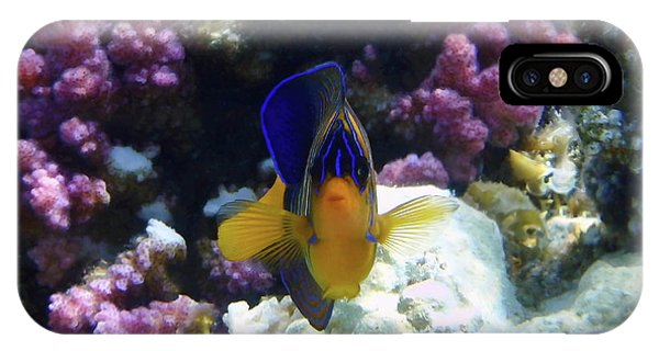 The Royal Angelfish IPhone Case