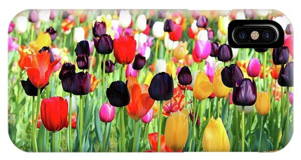 The Season Of Tulips IPhone Case