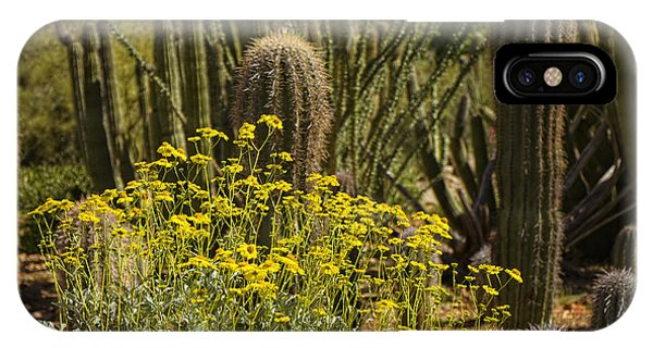 The Song Of The Sonoran Desert IPhone Case