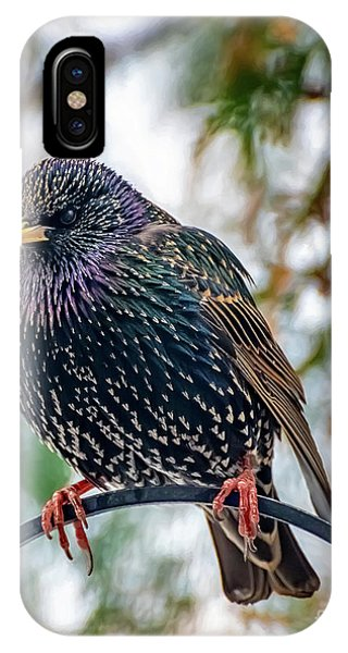 Starlings iPhone Case - The Starling by Adrian Evans