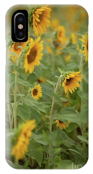 The Sunflower Patch IPhone Case