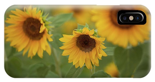 The Sunflowers In The Field IPhone Case