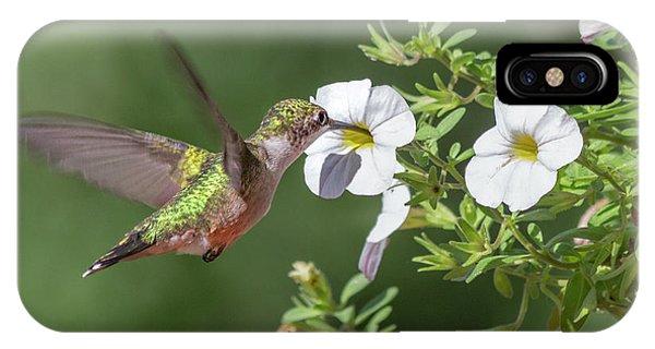 Beautiful Hummingbird iPhone Case - The Sweet Hummingbird by Betsy Knapp
