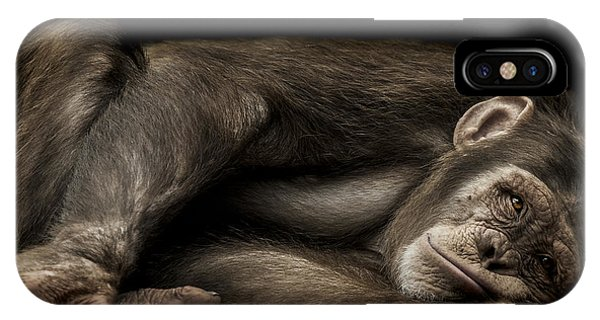 Chimpanzee iPhone Case - The Teenager by Paul Neville