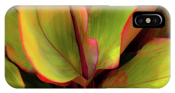 The Ti Leaf Plant In Hawaii IPhone Case