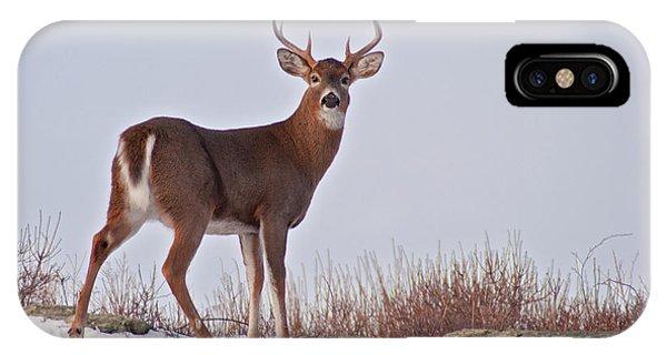 The Watchful Deer IPhone Case