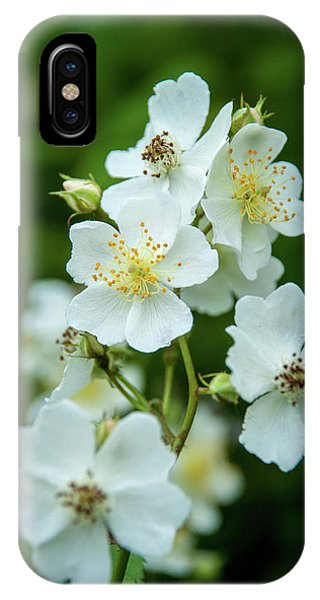 IPhone Case featuring the photograph The Wild Rose by Mark Dodd
