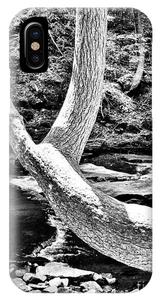 The Wishbone Tree Bw IPhone Case