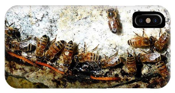 Honeybee iPhone X Case - Thirsty Honeybees by Will Borden