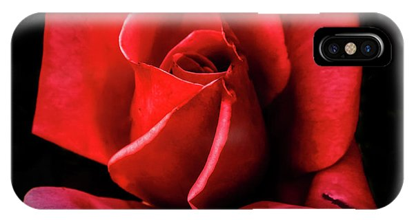 Rosebush iPhone Case - This Bud Is For You by Robert Bales