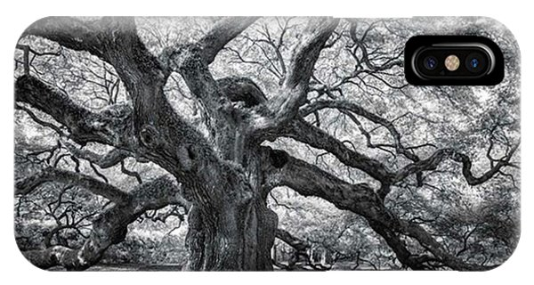 iPhone Case - This Tree Is Located In Charleston by Jon Glaser