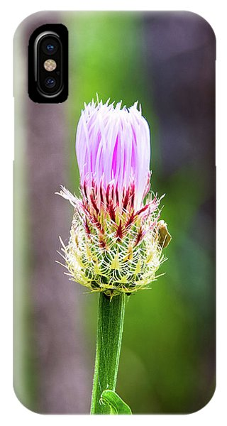 Thistle In The Canyon IPhone Case