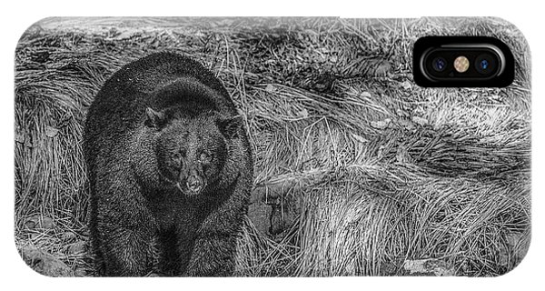 Thornton Creek Black Bear IPhone Case