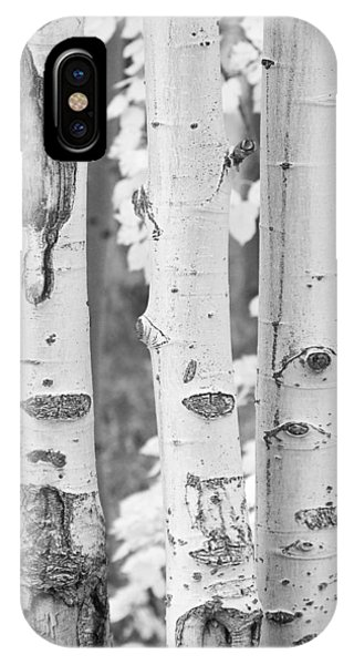 Three Aspens In Black And White  IPhone Case