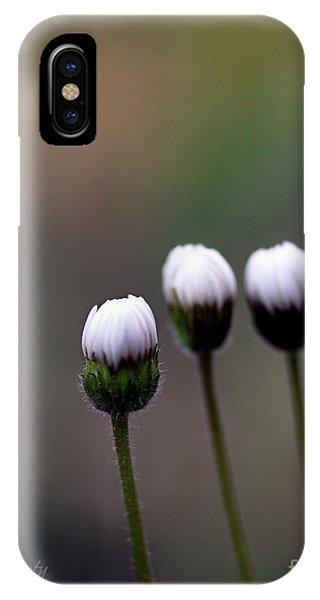 Three Buds Sprawling Daisy IPhone Case